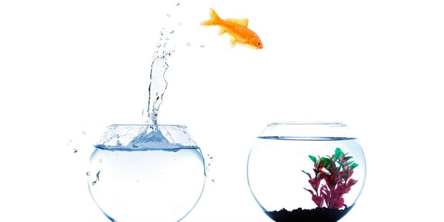 6 Key Reasons Why IBD Advisors are Moving to the RIA World